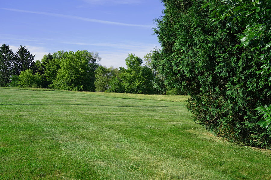 Mowing Stripes on lawn photo
