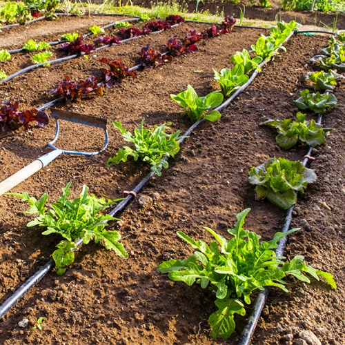 c-irrigation